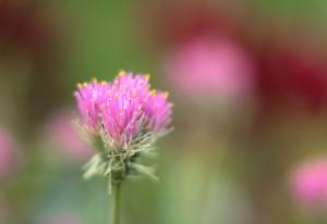 夏の花屋さん
