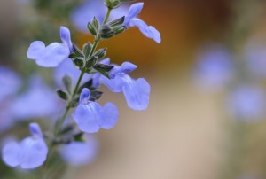 ガーデニングショップの花