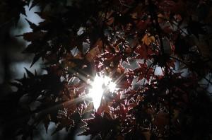 もみじの中の光