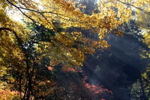 金鑚神社での光芒