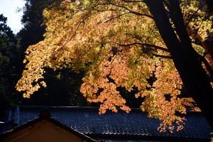 金鑚神社の建物と紅葉