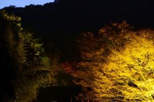 森のライトアップ