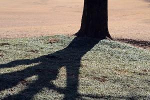 公園の木の影