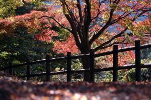 山の公園の紅葉