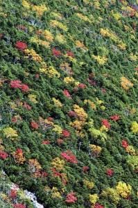 紅葉の山肌