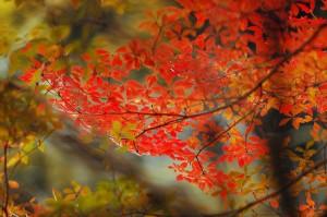 風布の紅葉