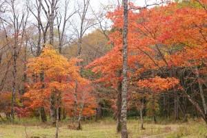 大清水の紅葉