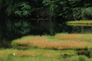 志賀高原・渋池