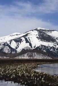 ミズバショウと至仏山