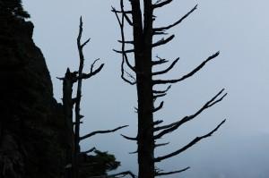 志賀高原・枯れ木