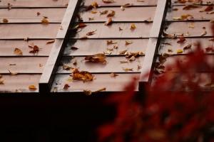 屋根の上の落葉