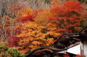 大陽寺の紅葉
