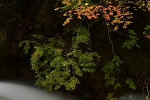 照葉峡(てりはきょう)の紅葉