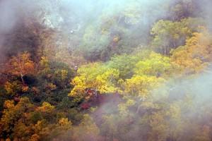 ダケカンバの黄葉