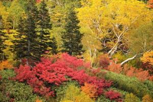 針葉樹と紅葉