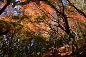 紅葉の光と陰
