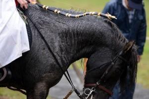 流鏑馬の馬